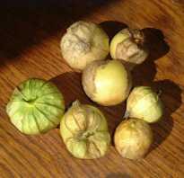 Физалис овощной полезные свойства