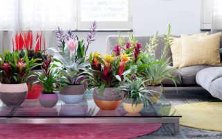 Самые полезные для квартиры комнатные растения
