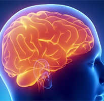 Полезные продукты для работы мозга