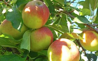 Яблоко для чего полезно