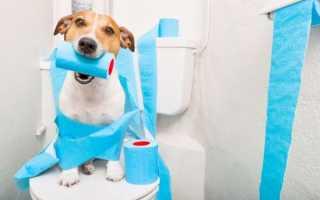 Что дать собаке при запоре. Что нужно сообщить врачу. Распространённые причины запоров