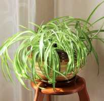 Комнатные растения полезные для здоровья человека