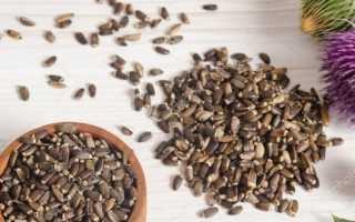 Семена расторопша полезные свойства и противопоказания