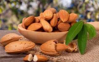 Миндаль или грецкий орех что полезней