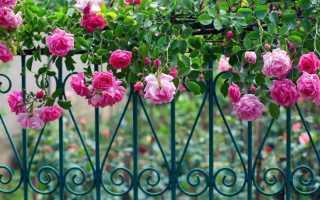Как сделать опору для вьющейся розы