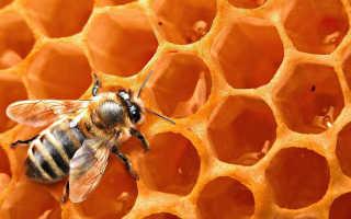 Чем полезен мед с водой