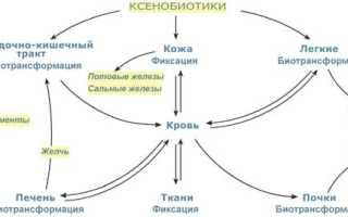 Животный индикан. Определение индикана в моче. Две фазы биотрансформации ксенобиотиков