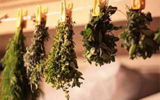 Полезные для поджелудочной железы травы