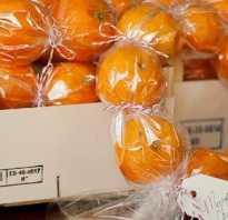 Венок из мандаринов своими руками. Мандариновый венок Венок из мандаринов на новый год
