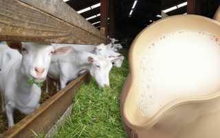 Чем полезно козье молоко для желудка