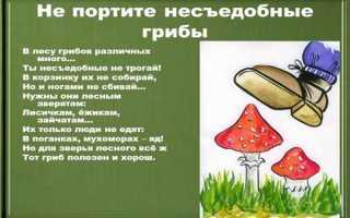 Чем полезны ядовитые грибы