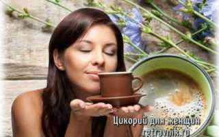 Цикорий полезные свойства и противопоказания для женщин