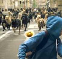 Эффективная защита от собак: что делать при нападении. Как защититься от нападения собак
