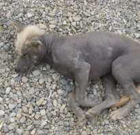 Самые страшные собаки. Самые страшные породы собак в мире с названиями и фотографиями