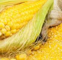 Чем полезны отруби кукурузные