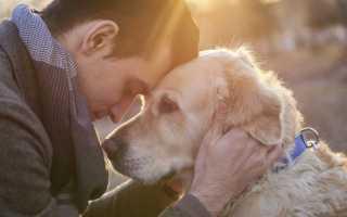 Почему собака воняет псиной? Запах вашей собаки вас не радует: отчего же так случается