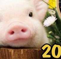 Поросенок новый год. Новый год для поросенка. Для приготовления салата нам понадобится