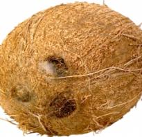 Чем полезен свежий кокос