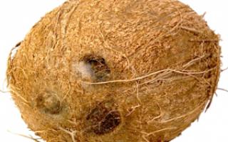 Что полезного в кокосе