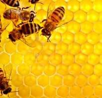 Чем полезны соты пчелиные