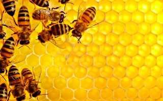 Соты пчелиные чем полезны