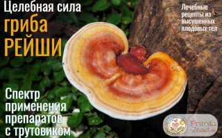 Рейши гриб полезные свойства