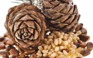 Кедровый орех полезные свойства для женщин