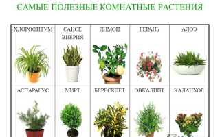 Полезное растение комнатное растение