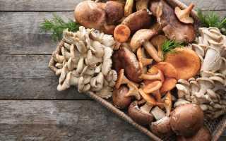 Что в грибах полезного