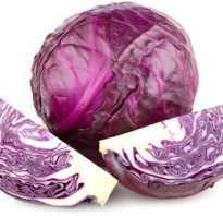 Чем полезна фиолетовая капуста