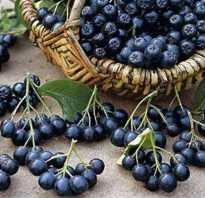 Плоды рябины черноплодной полезные свойства и противопоказания