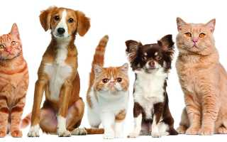 Чем отличается кастрация от стерилизации кошек. Кастрация кота (Стерилизация): Плюсы и минусы, цены