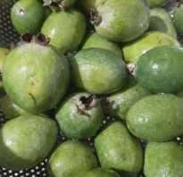 Фейхуахуа фрукт польза