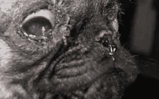 У собаки слизь из носа. Что делать при обильных выделениях из носа у домашних животных