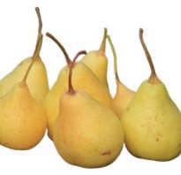 Чем полезна груша для организма женщины