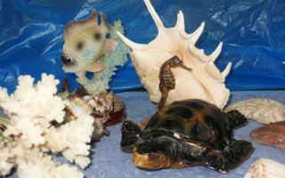Детям про подводный мир. Разработка занятия «Подводный мир» для детей старшего дошкольного возраста