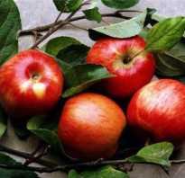 Чем полезны яблоки для беременных