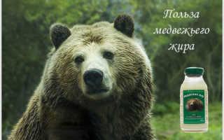 Чем полезен медвежий жир для мужчин
