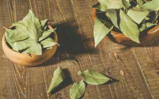 Польза и вред лаврового листа