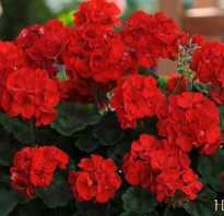 Полезные домашние цветы