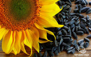 Что полезного в семечках подсолнуха