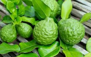 Чай бергамот полезные свойства и противопоказания