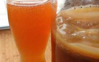 Чайный гриб полезные свойства как ухаживать