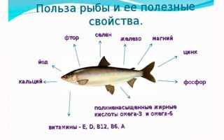 Полезные свойства рыбы для человека